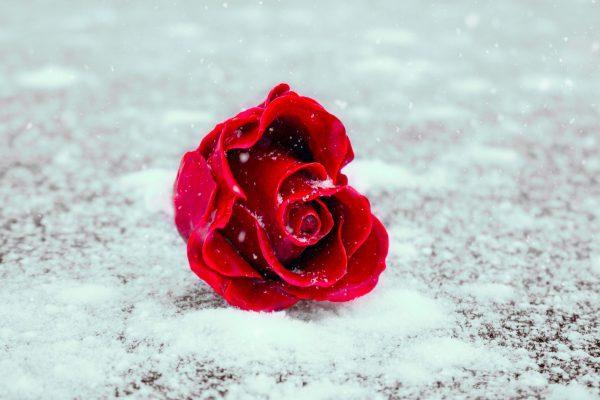 Abhängigkeit in Beziehungen- warum emotionale Verstrickungen echte Gefühle ersticken und die Liebe sterben lassen.